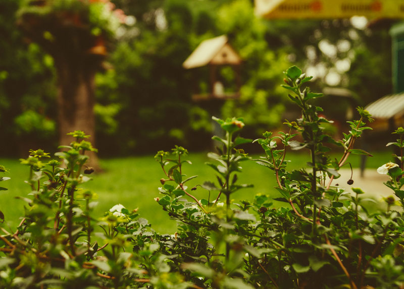 monza pulizie giardini